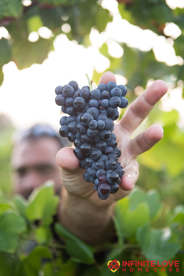 grapes and Alzheimer's disease