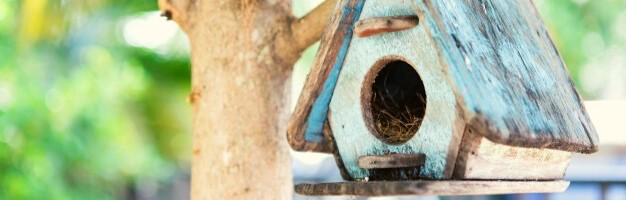Bird Watching/Feeding