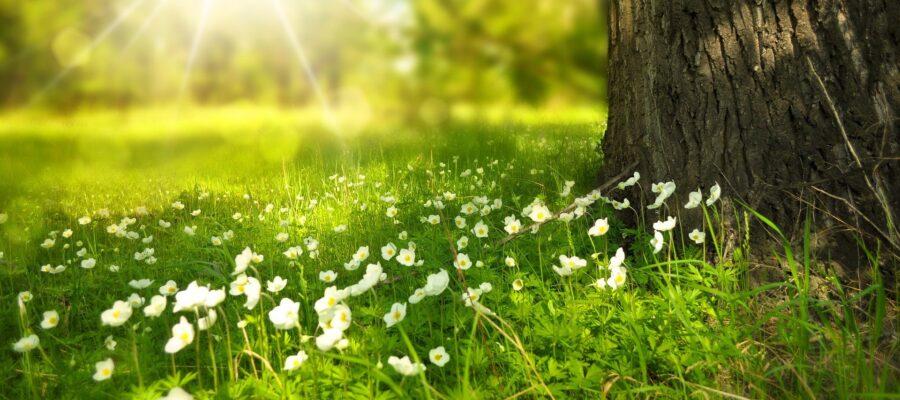 spring health tips for seniors